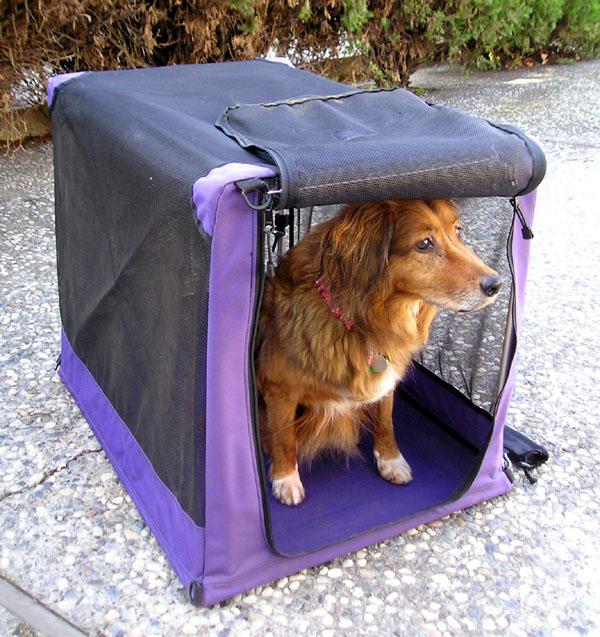 Pet Disaster Tip #15 – Dog Crates