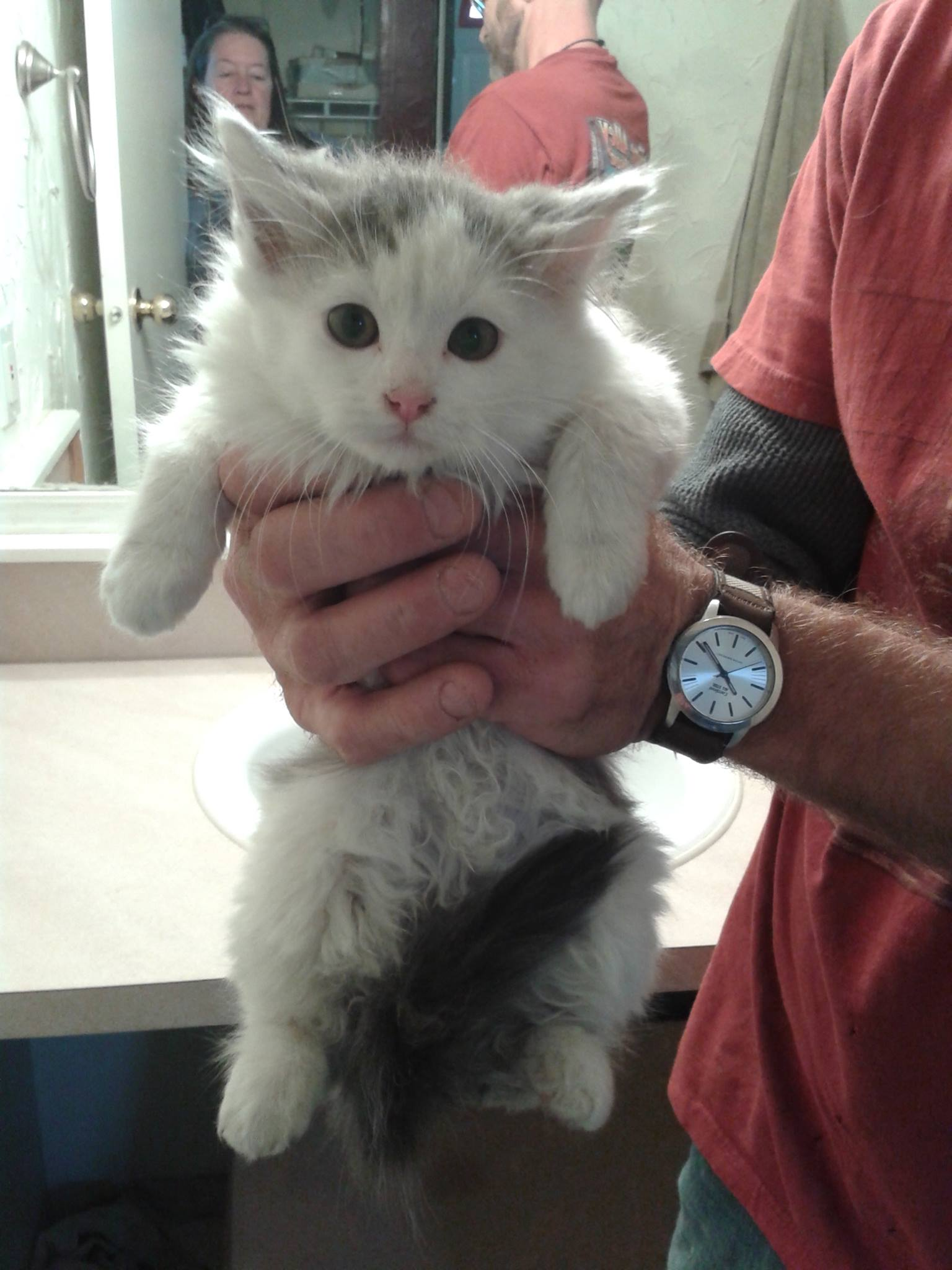 Forgotten Feline Feral Cat Colony TNR program