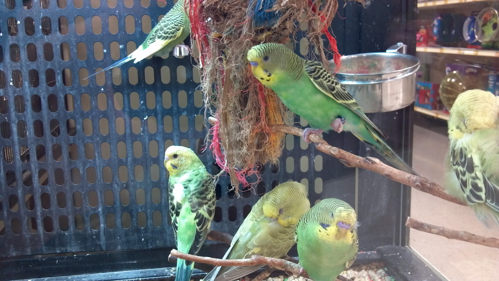 Are you Prepared to Take Care of your Bird when a Disaster Strikes?